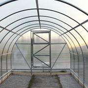 Теплица «Агроном» 6 метров фото