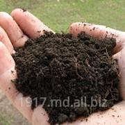 Удобрения органические Биогумус фото