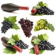 Сок виноградный концентрированный фото
