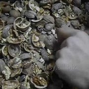 Переработка грецкого ореха в Молдове фото