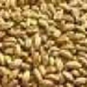 Перевозка пшеницы фото
