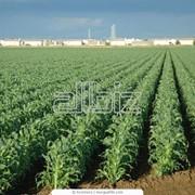 Консультации относительно систем, основных требований, правил ведения органического хозяйствования фото