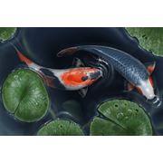 Рыбки декоративные фото