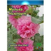 Цветы Мальва Ньюпорт розовая (многолетняя) (20шт) фото