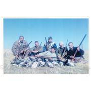 Организация охоты на гуся, утку, белолобую казарку фото