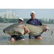 Рыбалка и охота на Сома в Казахстане фото