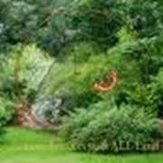 Озеленение территорий фото