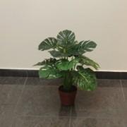 """Растение искусственное """"Монстера в горшке"""" фото"""