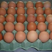 Инкубационное яйцо куриное Белый Бройлер ROSS-308 фото