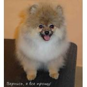 Стрижка собак разных пород фото