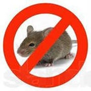 Дератизация мышей фото