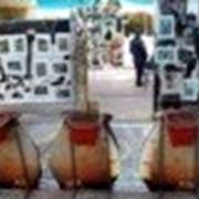 Проведение выставок Выставка Израиль фото