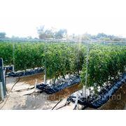 Восстановитель почвы ЭридГроу® - озеленить пустыню фото