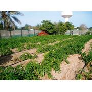 Активизатор почвы ЭридГроу® - озеленить пустыню фото