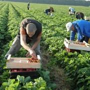 Сельскохозяйственные работы в Польше фото