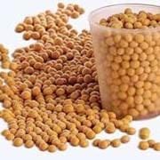 Семена сои сорта УСХИ 6 суперэлита фото