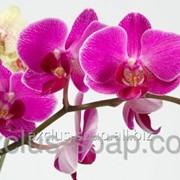 Орхидея отдушка-10 мл фото