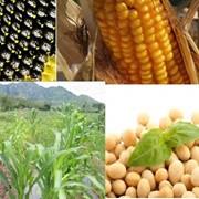 Удобрения жидкие и безводные для культур с длинным вегетационным периодом фото