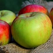 Яблоки натуральные фото