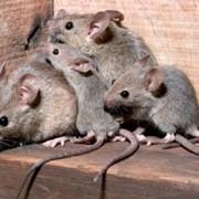Борьба с мышами фото