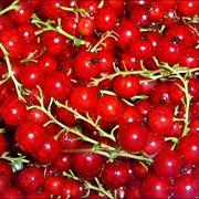 Красная сородина свежемороженная фото