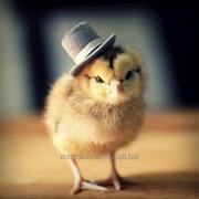 КПО для кормления с/х животных и птицы фото
