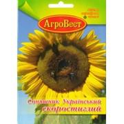 Семена подсолнечника, Опт, украина, низкие цены, ПОДСОЛНЕЧНИК Украинский Скороспелый, фото