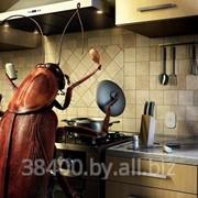 Избавление от тараканов фото