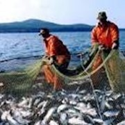Вылов рыбы фото
