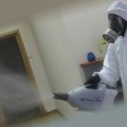 Дезинсекция, уничтожение бытовых насекомых фото