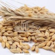 Закупка зерна пшеницы фото