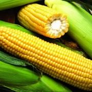 Гибриды семян кукурузы Пионер фото