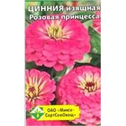 Цинния изящная Розовая принцесса группа Георгиноцветная фото
