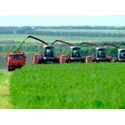 Универсальные тракторные масла фото