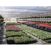 ChromatiNet Grey 40, Затеняющая сеть серого цвета для управления ростом растений фото