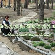 Уход за садовыми растениями. фото
