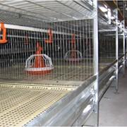 Батареи клеточные для птицеводства фото