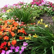 Организации выращивания цветов фото