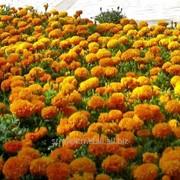 Устройство цветников и клумб №21 фото