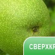 СК-СО2 экстракт аниса фото
