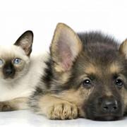 Консультации ветеринарные фото