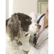 Оперативное лечение грыжи животных г. Симферополь фото