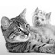 Средства по уходу за домашними животными фото