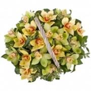 Цветочные корзины Орхидеи фото