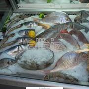 Рыба свежемороженая в ассортименте фото