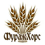 Зерно фуражное (пшеница, рожь, ячмень, кукуруза, тритикале, овес) фото