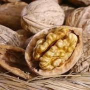 Орехи грецкие на экспорт фото