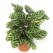 Горшечные растения фото