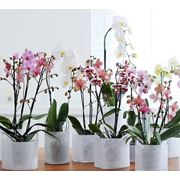 Растения горшечные фото