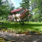 """База отдыха """"Сосенки"""", семейный отдых в Святогорске фото"""